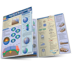 Quick Study QuickStudy Marine Biology Laminated Study Guide BarCharts Publishing Academic Reference Guide Main Image