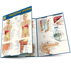 QuickStudy | Anatomy of the Digestive System Laminated Study Guide