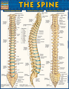 QuickStudy | The Spine Laminated Study Guide