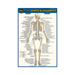 QuickStudy | Anatomy of The Joints & Ligaments Laminated Pocket Guide