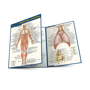 QuickStudy | Anatomy of The Nervous System Laminated Pocket Guide