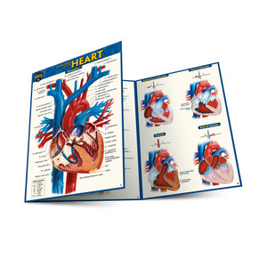 QuickStudy | Anatomy of The Heart Laminated Pocket Guide