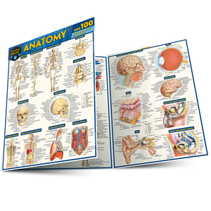 Quick Study QuickStudy Anatomy Quizzer Laminated Study Guide BarCharts Publishing Medical Education Guide Main Image