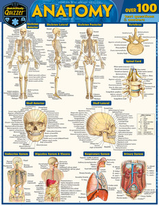 Quick Study QuickStudy Anatomy Quizzer Laminated Study Guide BarCharts Publishing Medical Education Guide Cover Image