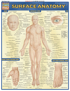 QuickStudy | Surface Anatomy Laminated Study Guide