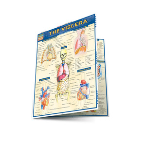 QuickStudy | The Viscera Laminated Study Guide