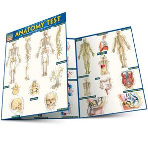 QuickStudy Quick Study Anatomy Test Laminated Study Guide Main Image