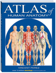 QuickStudy Atlas of Human Anatomy Book