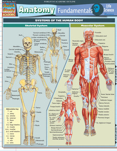 QuickStudy | Anatomy Fundamentals: Life  Science Laminated Study Guide