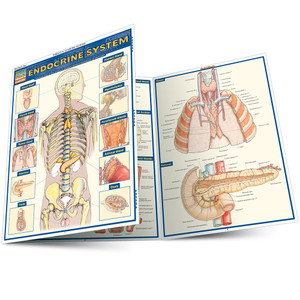QuickStudy | Endocrine System Laminated Study Guide