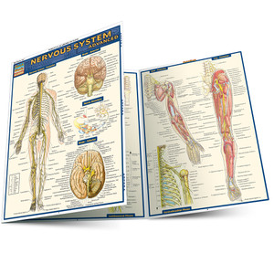 Quick Study QuickStudy Nervous System Advanced Laminated Study Guide BarCharts Publishing Medical Guide Main Image