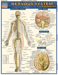 Quick Study QuickStudy Nervous System Advanced Laminated Study Guide BarCharts Publishing Medical Guide Cover Image
