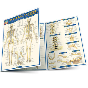 Quick Study QuickStudy Skeletal System Advanced Laminated Study Guide BarCharts Publishing Medical Reference Guide Main Image