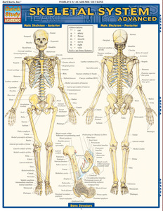 Quick Study QuickStudy Skeletal System Advanced Laminated Study Guide BarCharts Publishing Medical Reference Guide Cover Image