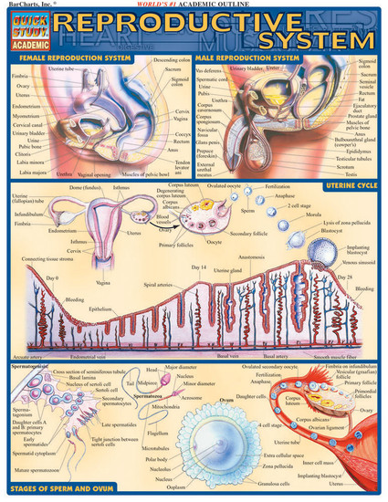 QuickStudy   Reproductive System Laminated Study Guide