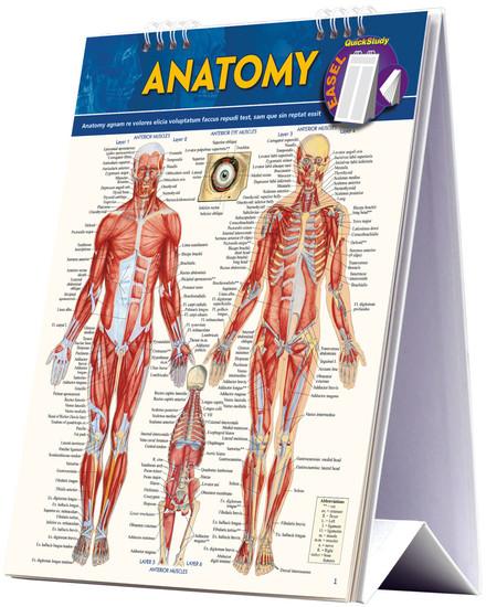 QuickStudy | Anatomy Easel