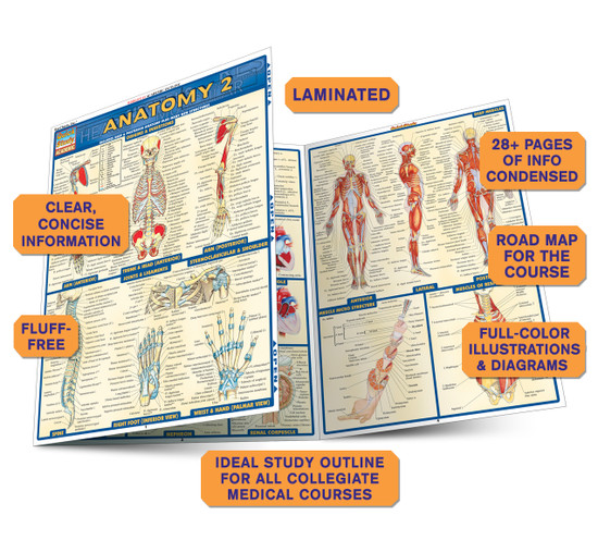 Quick Study QuickStudy Anatomy 2 Laminated Study Guide BarCharts Publishing Anatomy Reference Guide Benefits