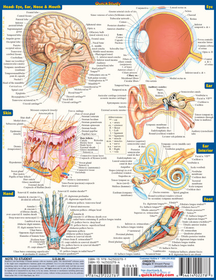 Quick Study QuickStudy Anatomy Laminated Study Guide BarCharts Publishing Anatomy Reference Guide Back Page Image