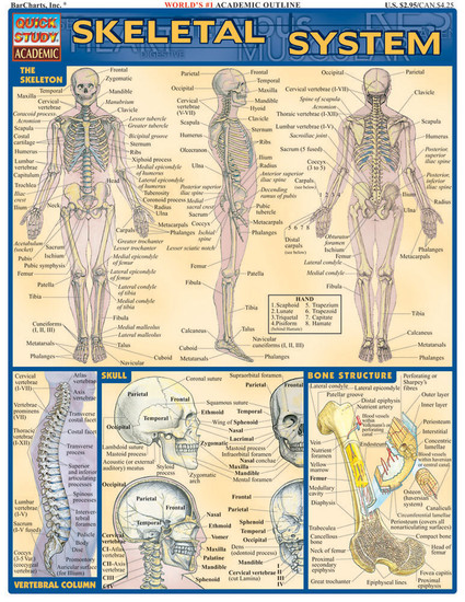 QuickStudy | Skeletal System Laminated Study Guide