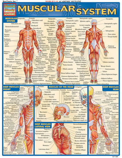 QuickStudy | Muscular System Laminated Study Guide