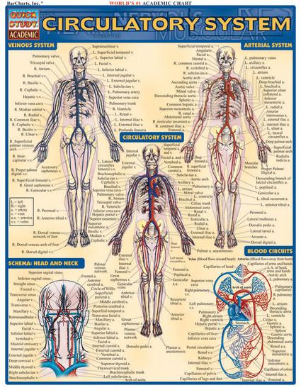 QuickStudy | Circulatory System Laminated Study Guide