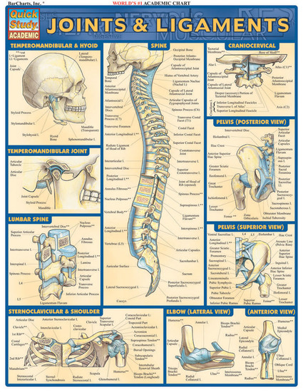 QuickStudy | Joints & Ligaments Laminated Study Guide
