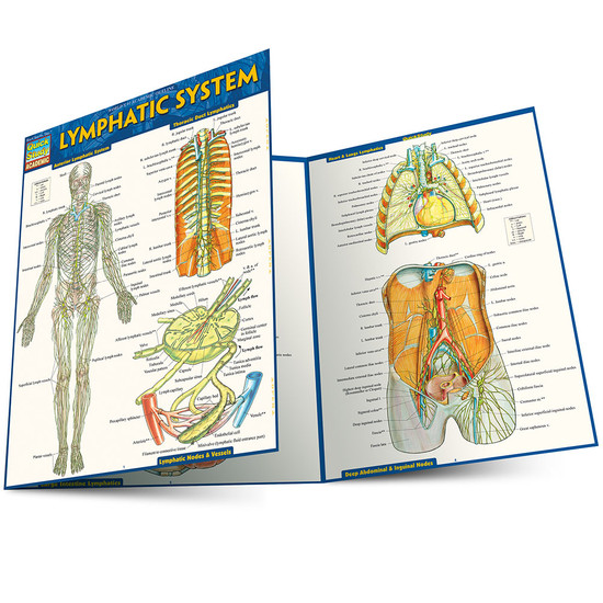 Quick Study QuickStudy Lymphatic System Laminated Study Guide BarCharts Publishing Reference Guide Main Image