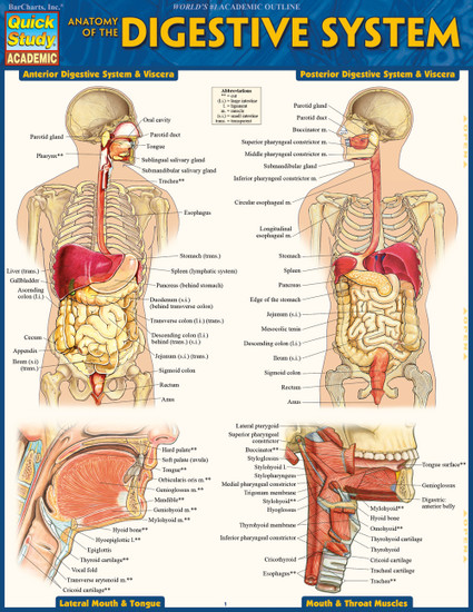 QuickStudy   Anatomy of the Digestive System Laminated Study Guide