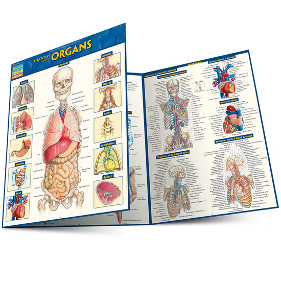 Quick Study QuickStudy Anatomy of the Organs Laminated Study Guide BarCharts Publishing Medical Edu Main Image