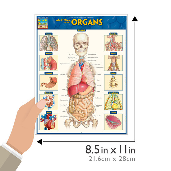 Quick Study QuickStudy Anatomy of the Organs Laminated Study Guide BarCharts Publishing Medical Edu Guide Size