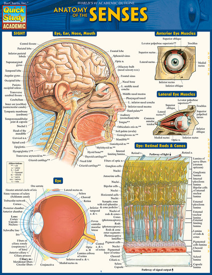 QuickStudy | Anatomy of The Senses Laminated Study Guide