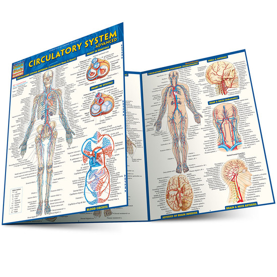 Quick Study QuickStudy Circulatory System Advanced Laminated Study Guide BarCharts Publishing Guide Main Image