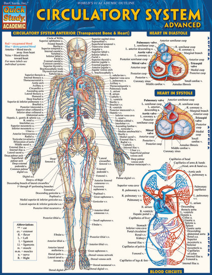 Quick Study QuickStudy Circulatory System Advanced Laminated Study Guide BarCharts Publishing Guide Cover Image