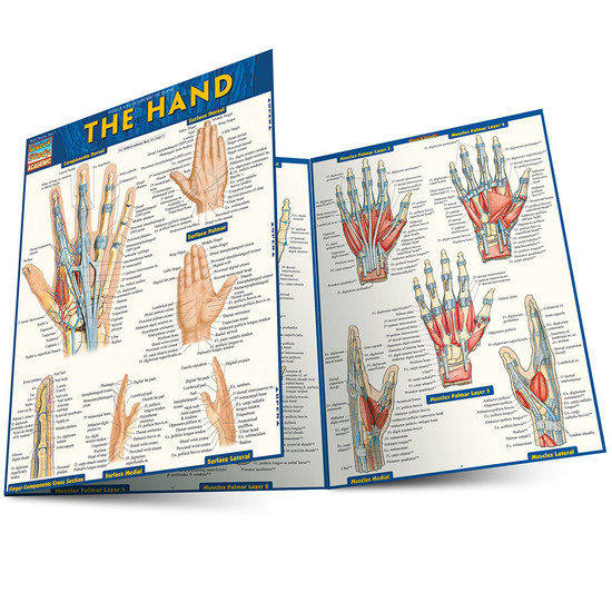 QuickStudy | The Hand Laminated Study Guide