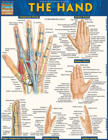 Quick Study QuickStudy The Hand Laminated Study Guide BarCharts Publishing Medical Reference Guide Cover Image