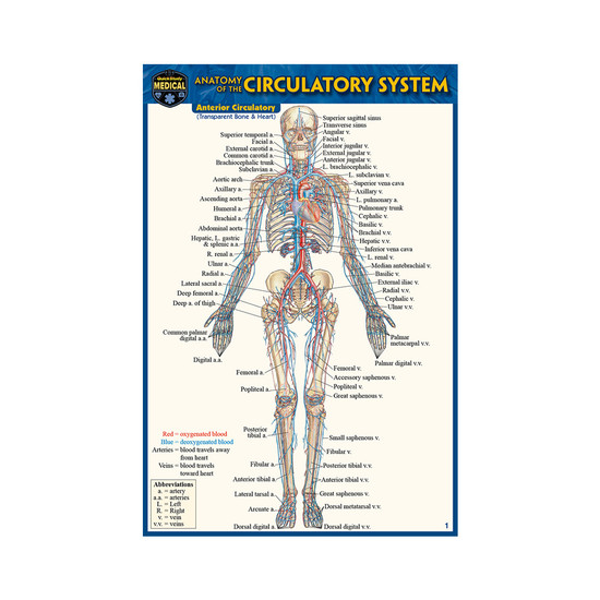 QuickStudy | Anatomy of The Circulatory System Laminated Pocket Guide