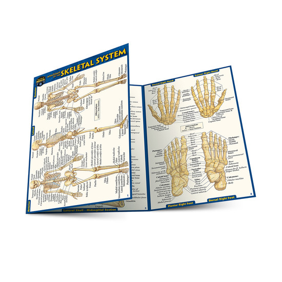 QuickStudy | Anatomy of The Skeletal System Laminated Pocket Guide