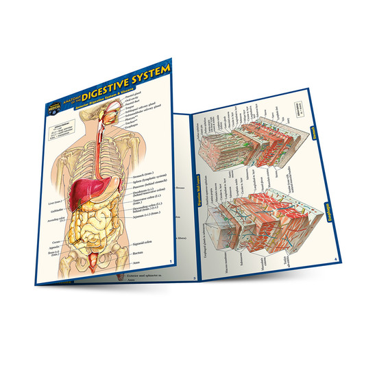QuickStudy | Anatomy of The Digestive System Laminated Pocket Guide