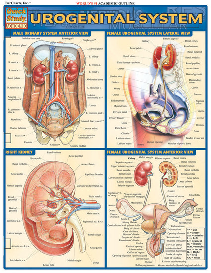 QuickStudy | Urogenital System Laminated Study Guide