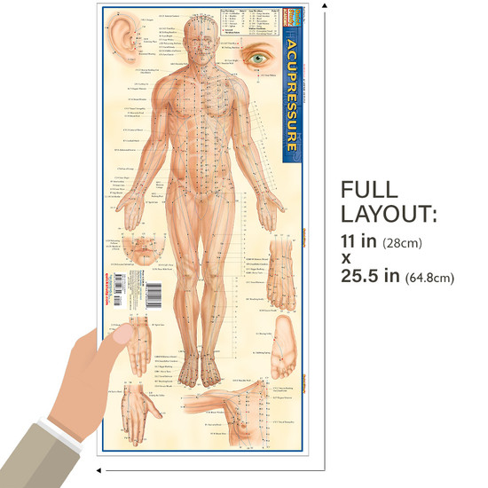 Quick Study QuickStudy Acupressure Laminated Study Guide BarCharts Publishing Acupressure Reference Guide Size
