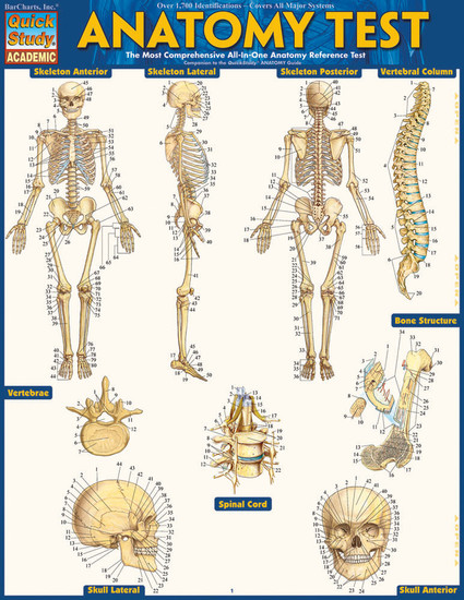 Quick Study QuickStudy Anatomy Test Laminated Study Guide BarCharts Publishing Medical Reference Cover Image