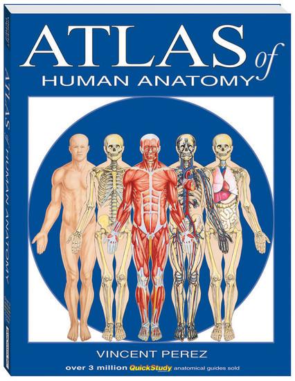 QuickStudy Atlas of Human Anatomy Book