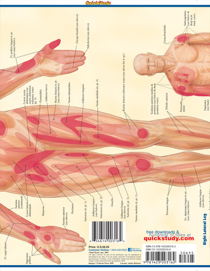 Quick Study QuickStudy Trigger Points Laminated Study Guide BarCharts Publishing Trigger Points Back Page Image