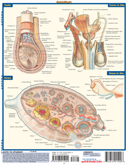 Quick Study QuickStudy Endocrine System Laminated Study Guide BarCharts Publishing Medical Guide Back Image