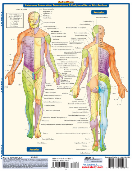 Quick Study QuickStudy Nervous System Advanced Laminated Study Guide BarCharts Publishing Medical Guide Back Image