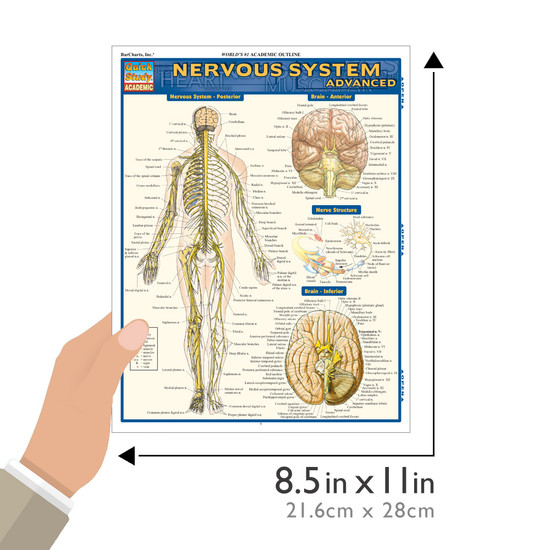 Quick Study QuickStudy Nervous System Advanced Laminated Study Guide BarCharts Publishing Medical Guide Size
