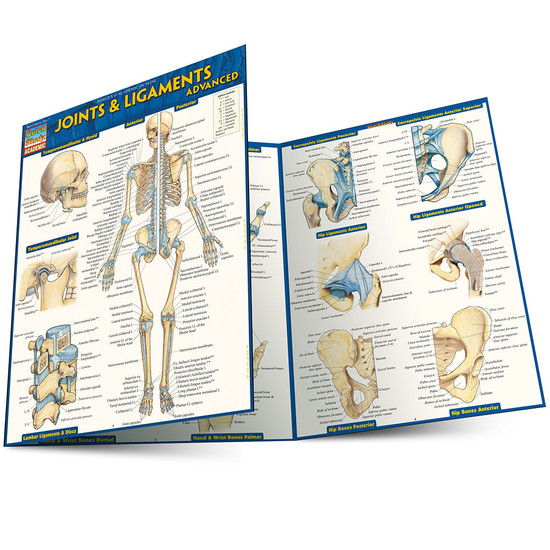 Quick Study QuickStudy Joints & Ligaments Advanced Laminated Study Guide BarCharts Publishing Guide Main Image