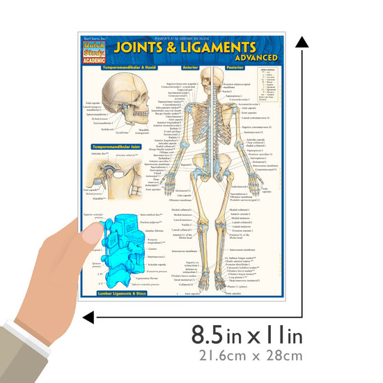 Quick Study QuickStudy Joints & Ligaments Advanced Laminated Study Guide BarCharts Publishing Guide Size