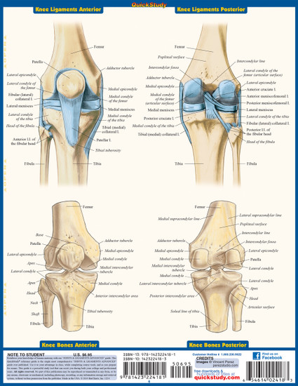 Quick Study QuickStudy Joints & Ligaments Advanced Laminated Study Guide BarCharts Publishing Guide Back Image