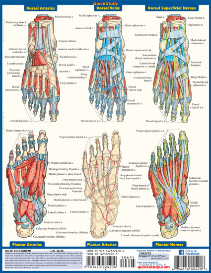 Quick Study QuickStudy The Foot Laminated Study Guide BarCharts Publishing Medical Academic Guide Back Image